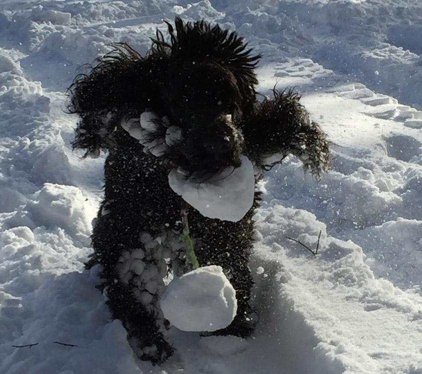 Hundepfoten im Winter, Forum Waldegg