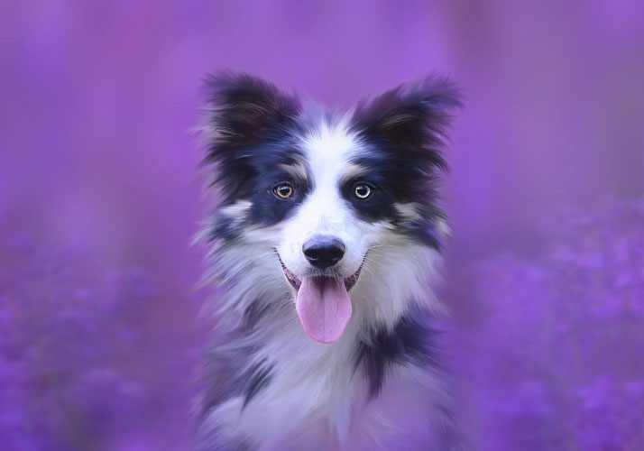 Energetisches Putzen, Akupunktur und ätherische Öle für den Hund, Forum Waldegg