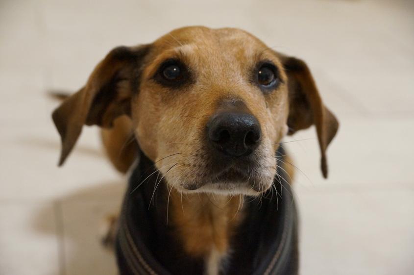 Richtige Ernährung für Hund und Katze - Forum Waldegg informiert