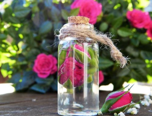 Aromatherapie bei Haustieren