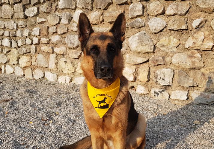 Das gelbe Tuch für meinen Hund, Hundetraining - psychologische Knackpunkte, Forum Waldegg informiert