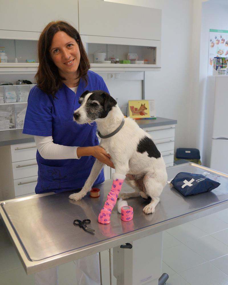 Erste Hilfe für Hunde, Forum Waldegg