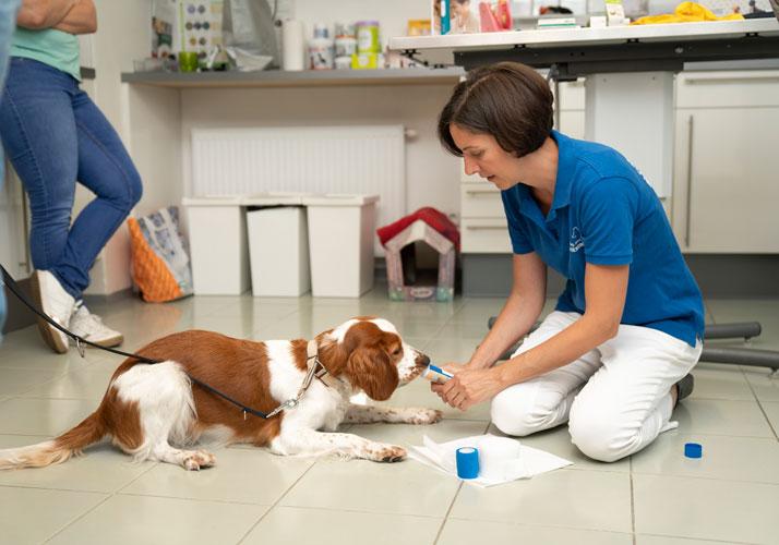 Hund Krallen schneiden, Medical Training, Forum Waldegg