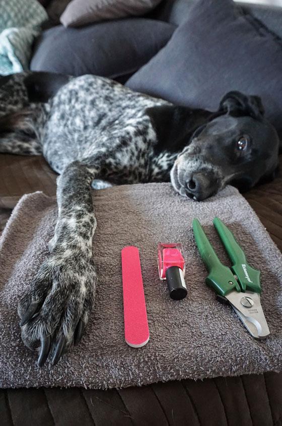 Hund Krallen schneiden, Tipps vom Tierarzt, Forum Waldegg