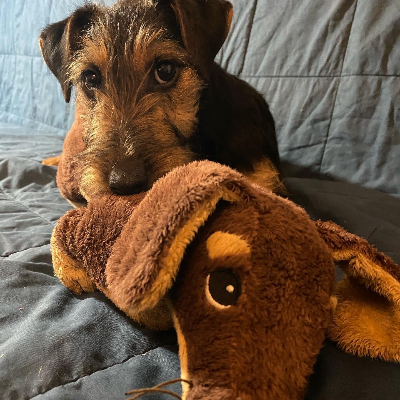 Ein Hund kommt neu ins Haus, Tipps vom Tierarzt, Forum Waldegg