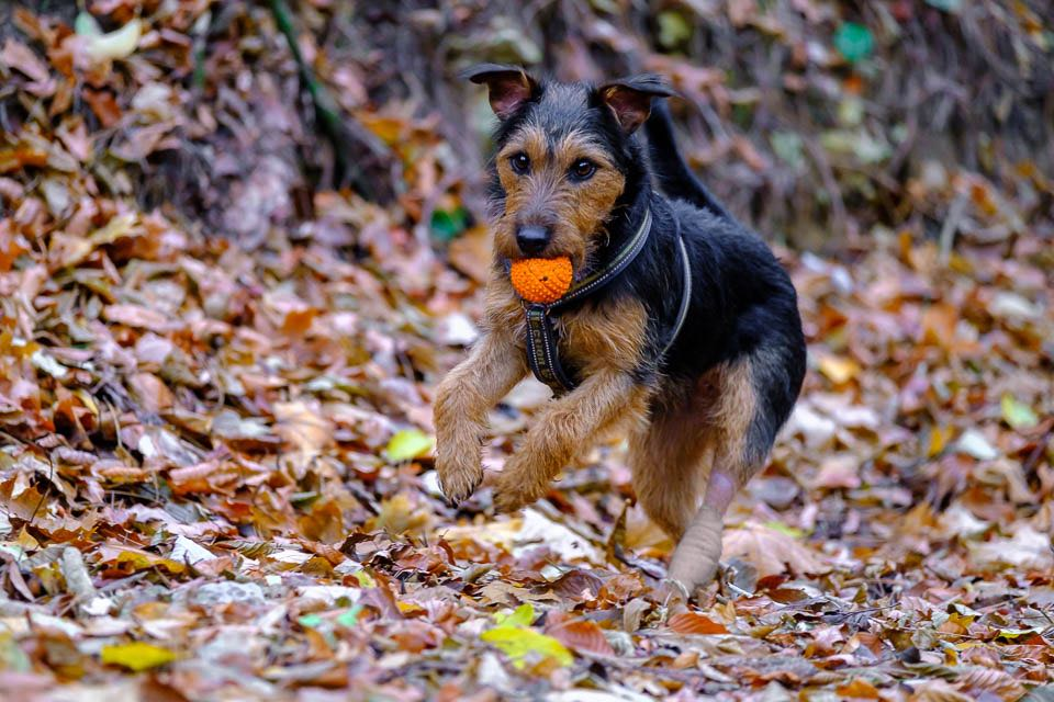 Gesund mit Hund durch den Winter, Forum Waldegg