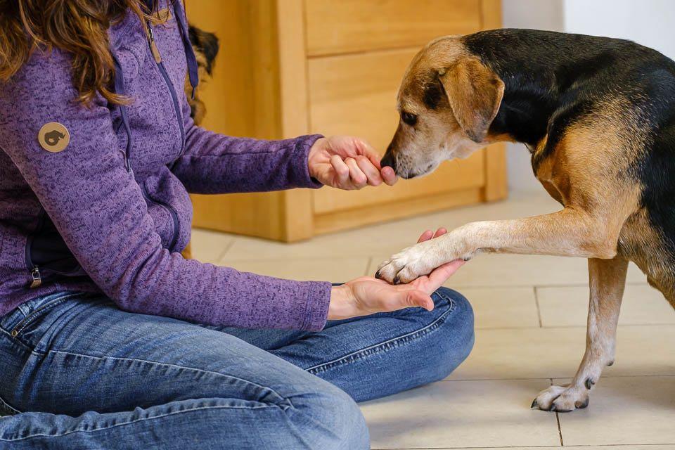 gesund mit Hund durch den Herbst kommen - FORUM WALDEGG informiert