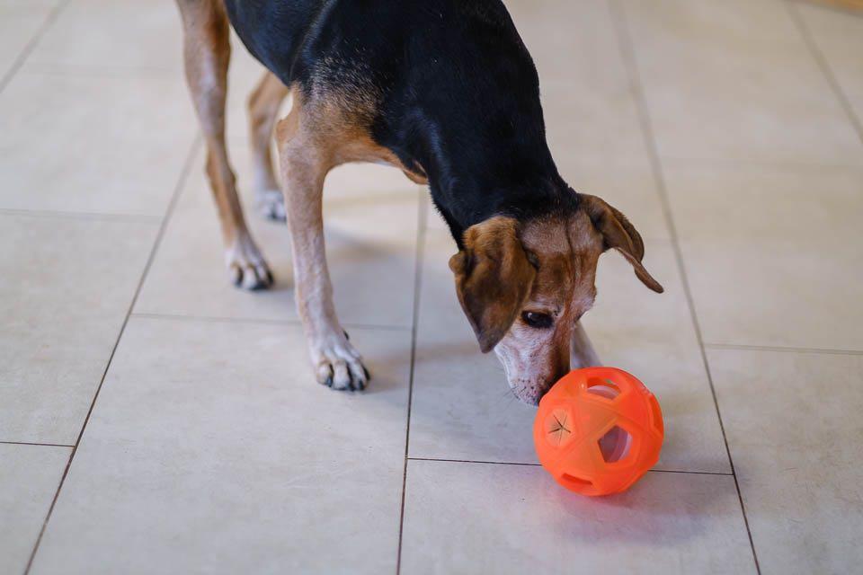 Weihnachten mit Hund, Forum Waldegg Geschenkstipps