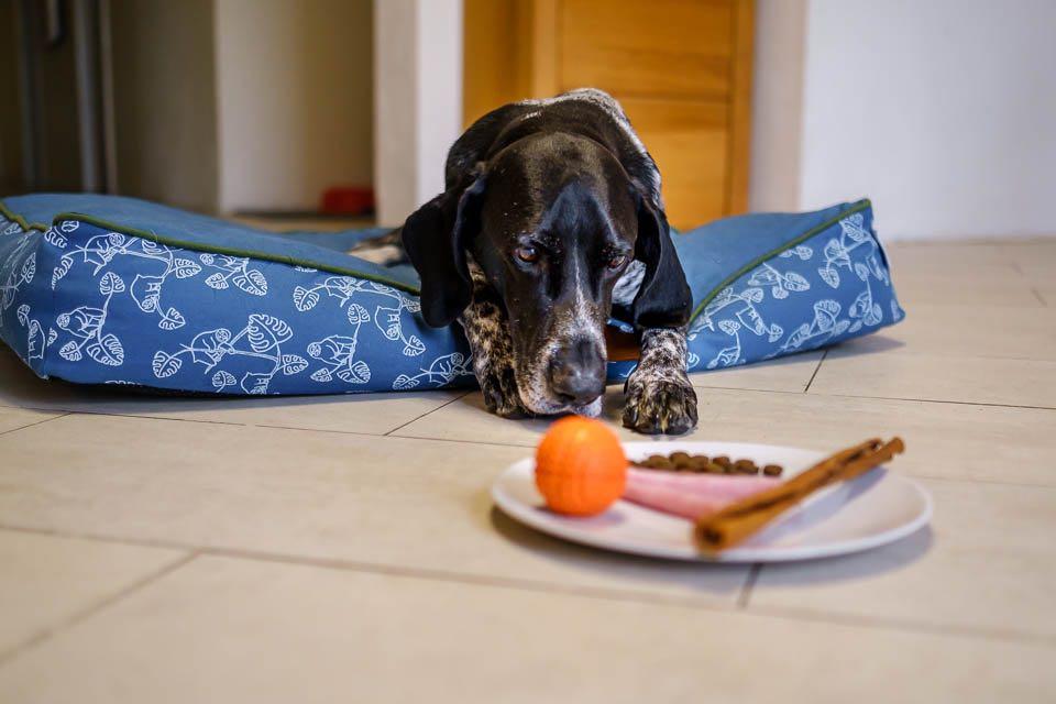 Hundeernährung nach Art & Bedarf, Forum Waldegg