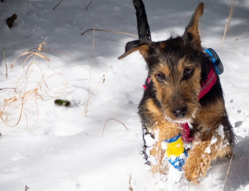 5 Tipps: Gesund mit Hund durch den Winter