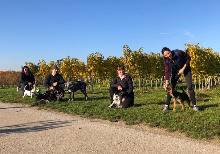 Forum Waldegg, Bewegung mit & für Ihren Hund, Aktives Gassi gehen, Fitnesswalk, Gassi gehen mit Hund, aktives Laufen mit Hund