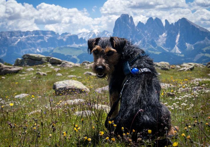 Wanderurlaub mit Hund, Forum Waldegg